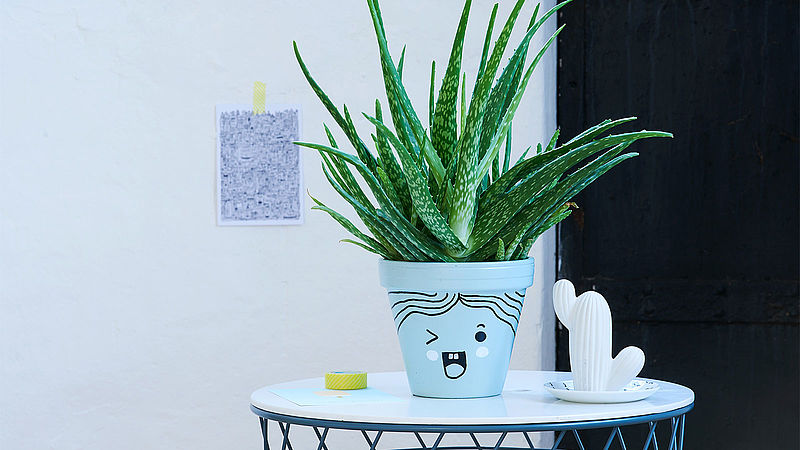 Plant pot with a wink