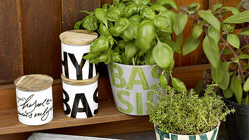 Create and decorate an indoor herb garden
